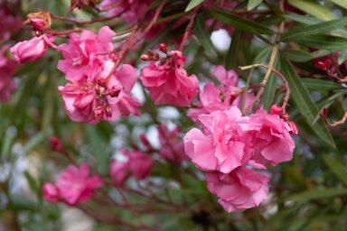 Цветы в Абхазии